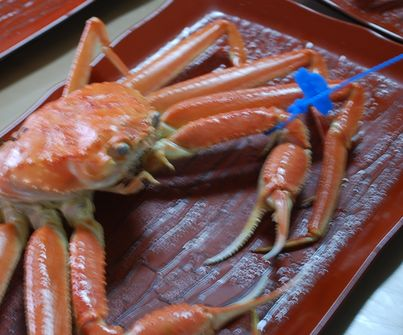 青のタグ 兵庫県の津居山蟹