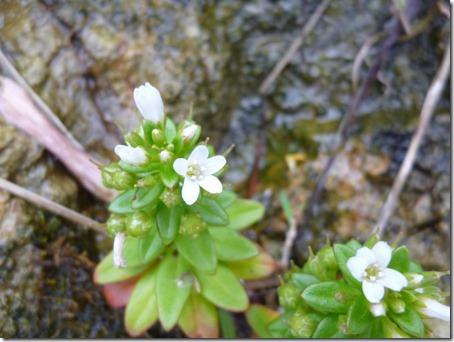 flower-m014